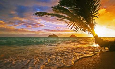 Vé máy bay đi Hawaii bao nhiêu tiền ở đâu bán rẻ nhất?