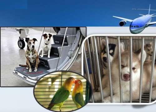 Quy định về việc mang theo động vật cảnh của EVA Air
