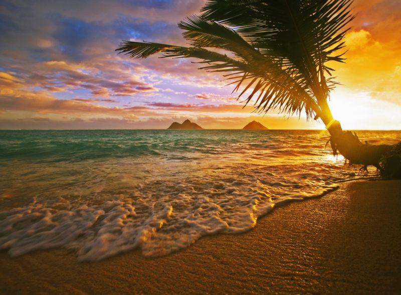 Vé máy bay đi Hawaii bao nhiêu tiền