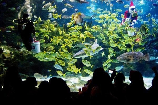 thuy-cung-aquaria